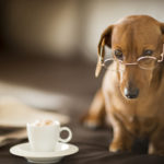 Dachshund dog wearing spectacles next to newspaper and coffee cu